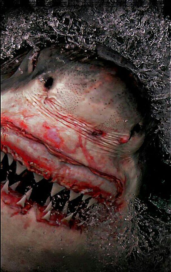 #SharkWeek