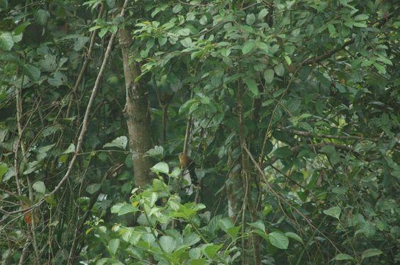 Borneo Rainforest Lodge