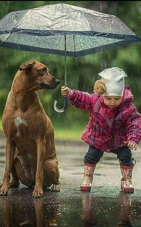 犬に傘を差し出す赤ちゃん