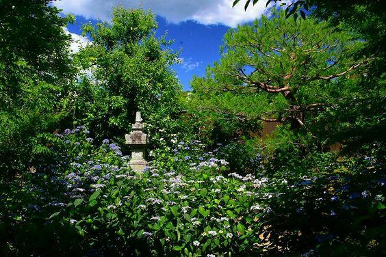 Amacha сад в храме Kennin-ji, в Киото: