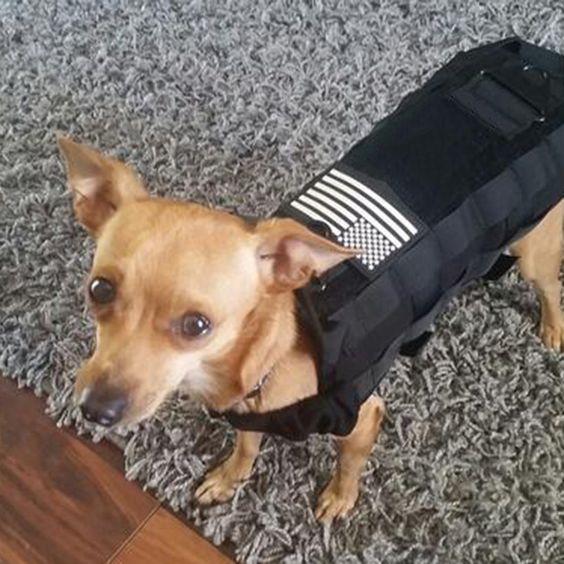 Táctico al aire libre Militar Perro Ropa carga entrenamiento Chaleco Arnes QP
