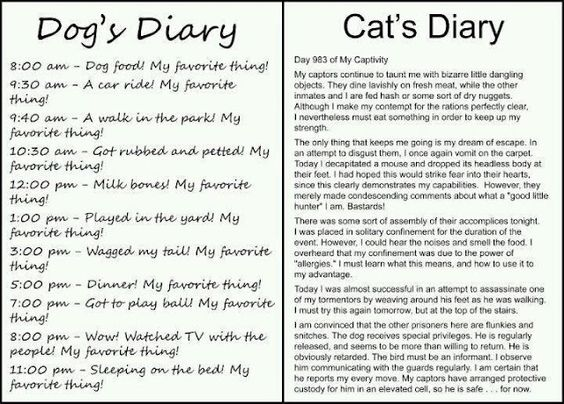 Hahahahahaha if you aren't too lazy to take the time to actually read this, it's hilarious!....and the reason I don't own a cat