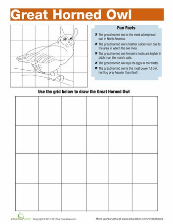 great horned owl facts worksheets owl and owl facts. Black Bedroom Furniture Sets. Home Design Ideas