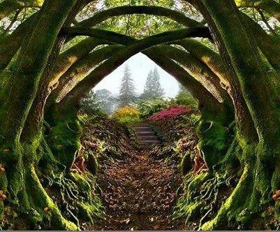 Fantasy Garden on Pinterest | Fantasy, Secret Gardens and Garden Gates