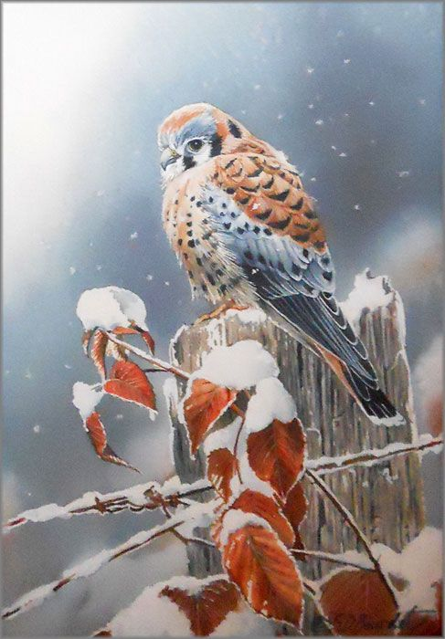Snow Flurries-kestrel