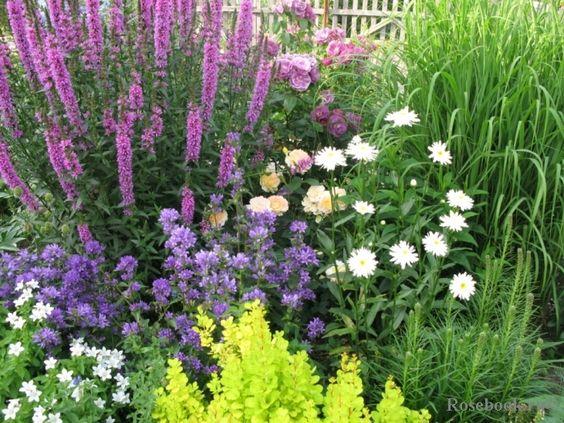 Combo: The Candle-like flowers of Purple Loostrife (Lythrum salicaria), roses...Garden and photo by Irina Pavlova (ПавловаИрина) St.Peterburg