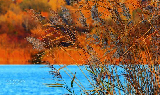 Autumn reed - Rainer Leiss