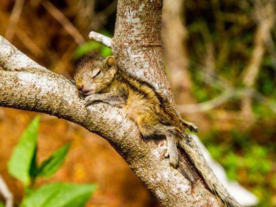 Das kleine Streifenhörnchen fühlt sich in seiner Tarnung sicher genug für ein Nickerchen