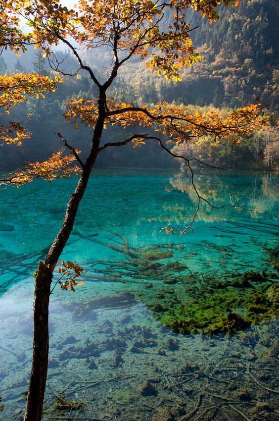 Five Flower Lake, Jiuzhaigou NP, Tibetan China