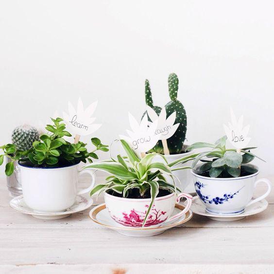 Tasses vintage et succulentes - DIY par Caroline / Le plus bel âge: