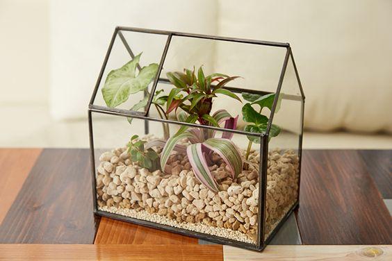 寒い日は、温かな部屋の中で作れるインドアガーデニング「テラリウム」がおすすめ。今月は、さまざまな形の透明容器を使った植物の小世界、その作り方と楽しみを紹介します。&