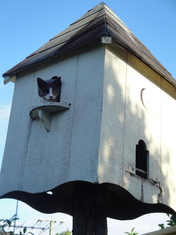 Who said dovecotes were just for the birds!