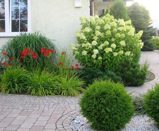 Reprezentacyjna Hortensja Przed Domem Front Garden Plants Garden