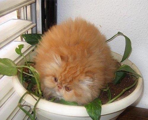 plant cat