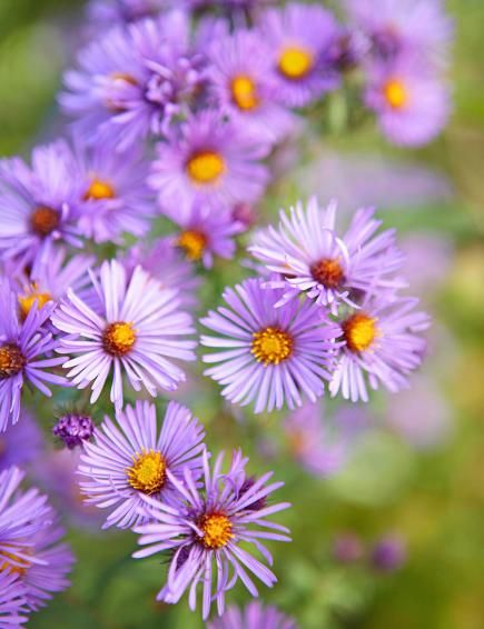 25 top easy care plants for midwest gardens gardens for Low maintenance summer flowers