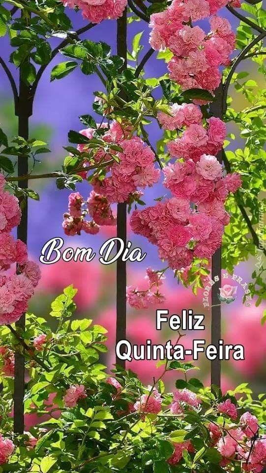 Bom Dia 5ª Feira Mensagem Com Flores Bom Dia Feliz Quinta