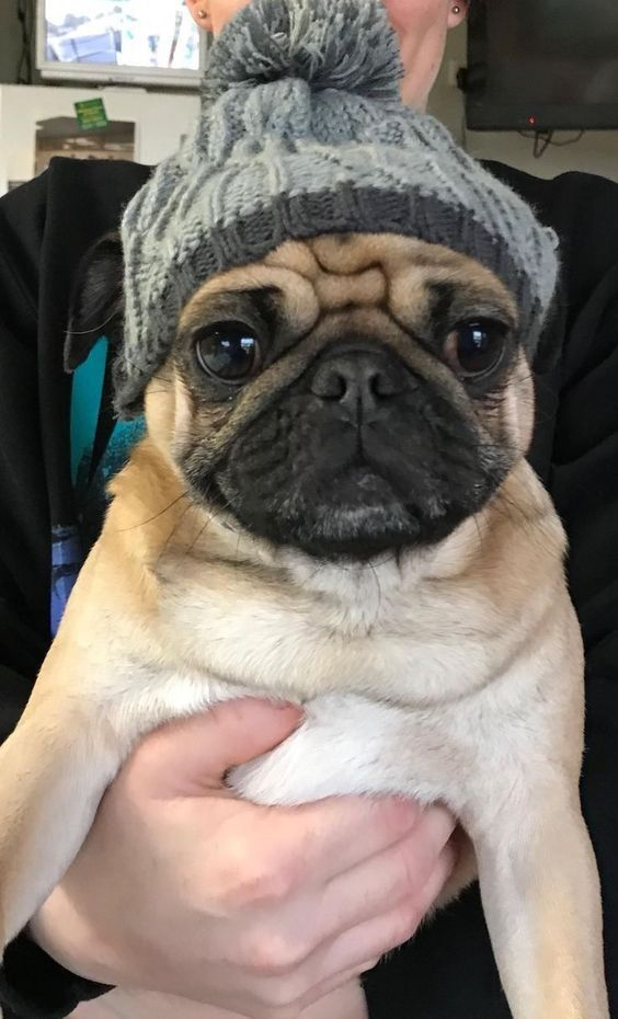 Stunning Hand Crafted Pug Accessories And Jewelery Available At
