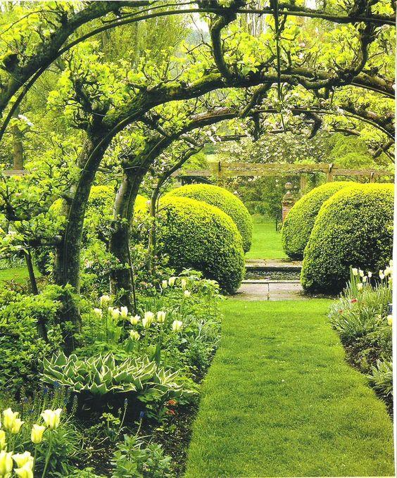 arche avec cordon fruitiers dans le jardin un espalier ou palmette dans votre jardin. Black Bedroom Furniture Sets. Home Design Ideas