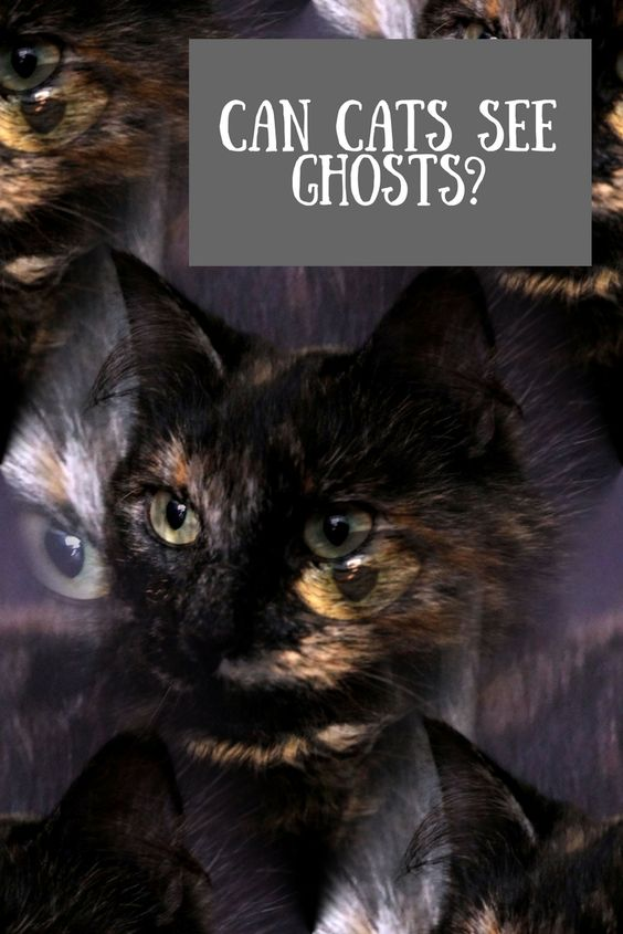 Can cats see ghosts? Can dogs see ghosts too?
