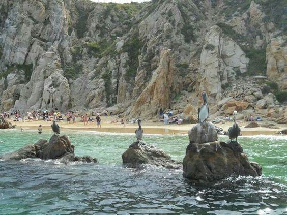 Cabo San Lucas,  pelicans