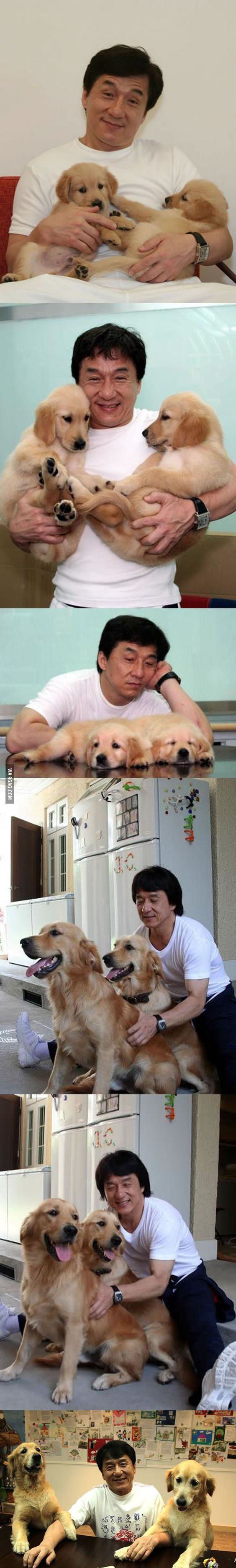 Jackie Chan and his two golden retrievers Jones and JJ.