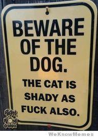 shady cats
