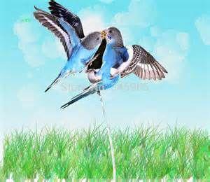 Flighted Pet Parrots - Bing Images