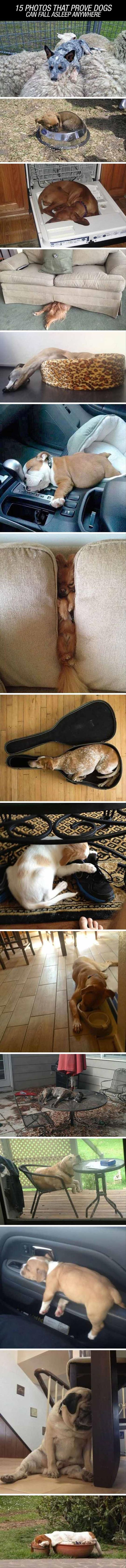 Proof Dogs Can Sleep Just About Anywhere  15 Pics: