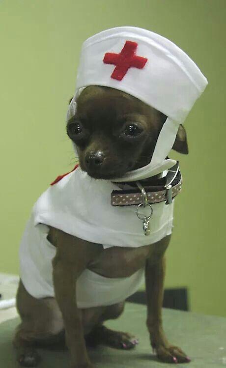 Nurse: