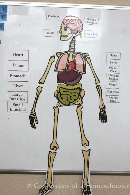 Life Size Human Anatomy Activity From Confessions Of A Homeschooler