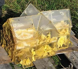 A plexiglass bee hive. #beehive #bees #skeps #houses