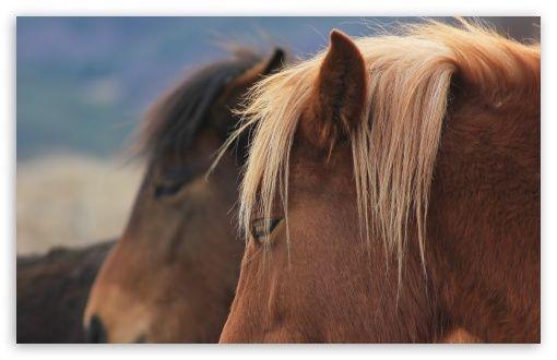 Download Wild Horses Bulgaria Hd Wallpaper Mooi