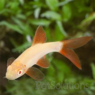 Pinterest the world s catalog of ideas for Semi aggressive fish