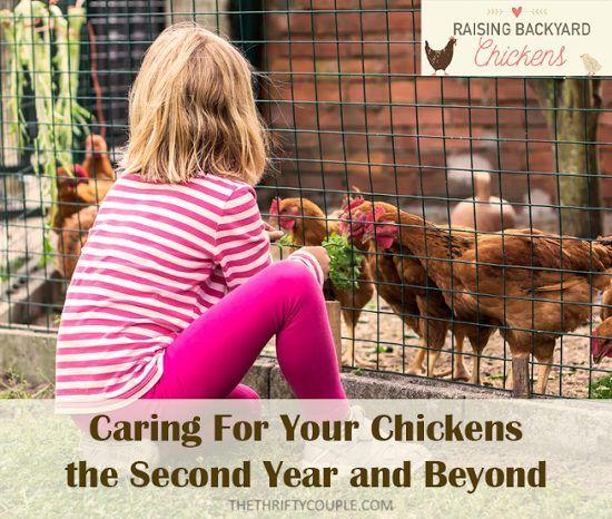Raising Urban Backyard Chickens : kids chickens and more other raising the o jays backyard chickens
