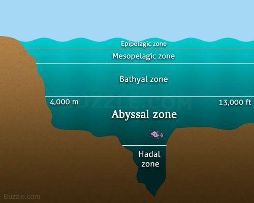 Abyssal zone diagram deep sea predators pinterest for Ocean floor zones diagram