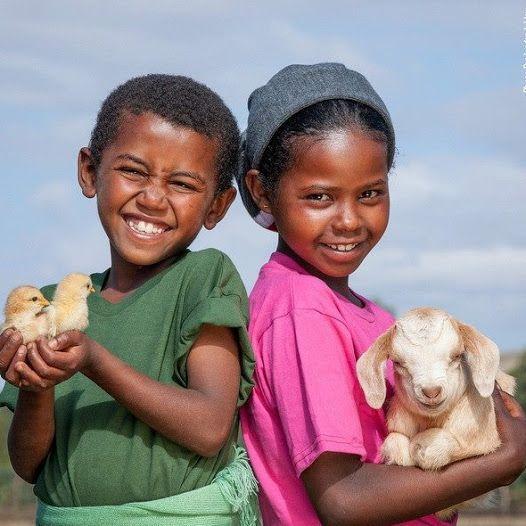 জীব জগৎ/Animals Site - Community - Google+: