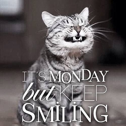Happy Monday Morning Quotes Funny Funny Good Morning Quotes Happy Monday Quotes