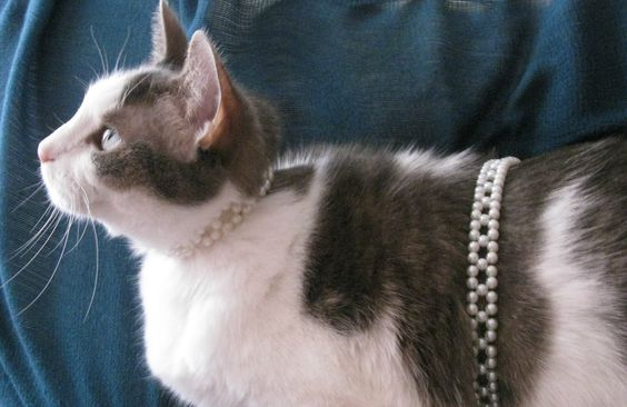 """Pearl and her """"waistchain""""- Does anyone know the name of this beading pattern?"""