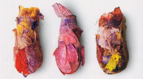 national geographic, december 2010  brood cells with petal shingles : osmia avosetta bees arrange flower petals to create beautiful and unique nests that swaddle their larvae in nutrients and warmth for the winter