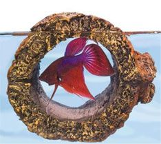 Top 10 betta fish toys 4 a floating log fish for Best place to buy betta fish