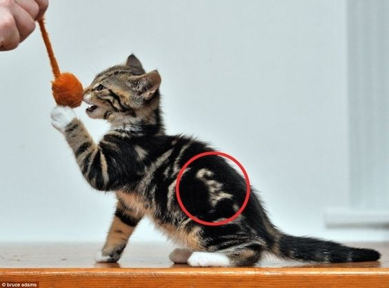 this cat is labeled to prevent confusion