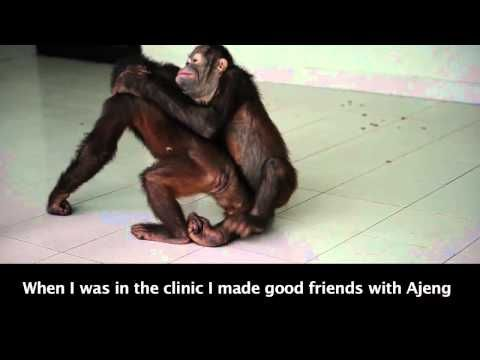 A message from Dodo:- Beautiful video please watch x