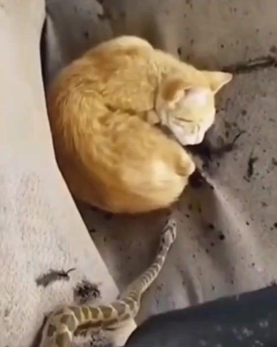 Watch Trending Videos For You Tiktok Cats Funny Cats Kitten