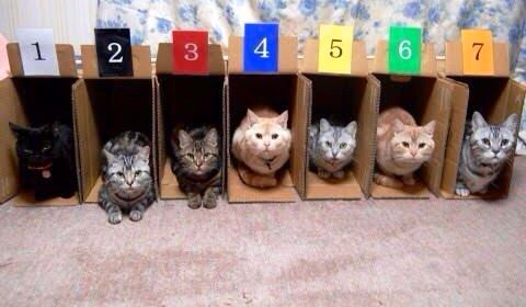 Cats inside Boxes for Race