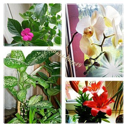 Domowy ogródek – akcja przesadzanie