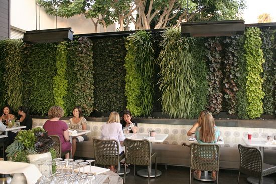 Living Wall @ True Food Kitchen in Newport Beach by Scott Hutcheon of Seasons Landscaping. Plants used are heucheras, ajuga, prathia, spider plant, and black mondo grass. Featured on freshdirt.sunset.com.: