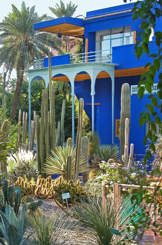 Towering cacti at jardin majorelle in marrakech once for Jardin yves saint laurent marrakech