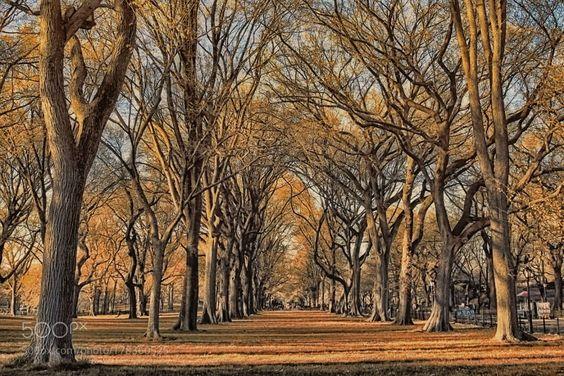 #photography Autumn In New York by ayseyorgancilar https://t.co/354mj4L3b7 #followme #photography