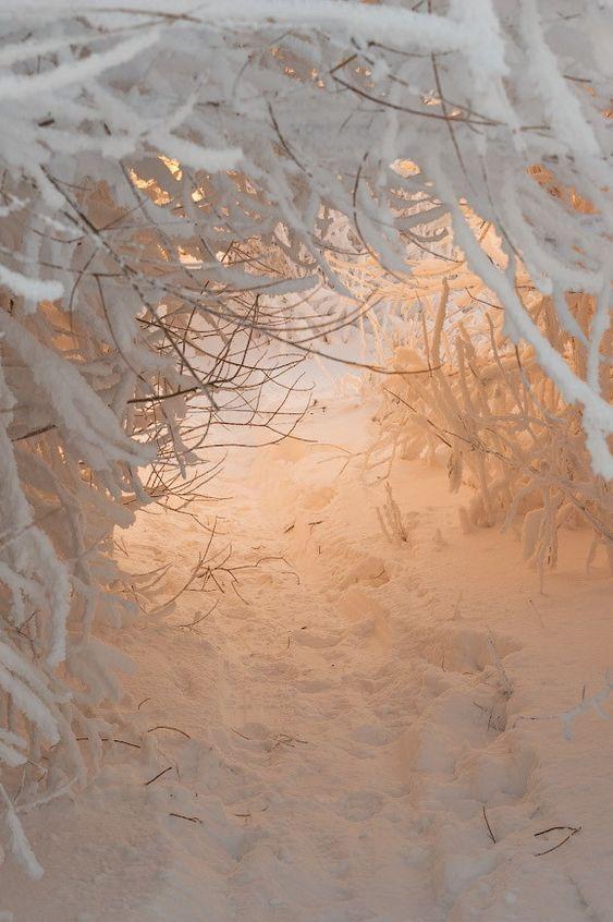 Winter wonderland | Winter light