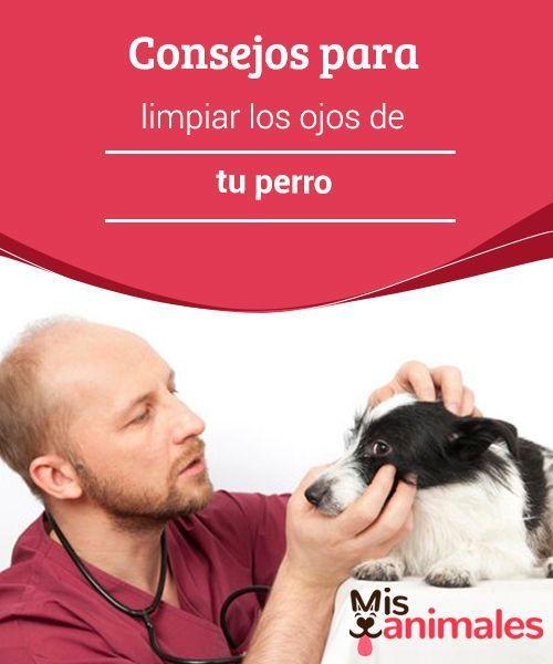 como tratar infecciones oculares en perros